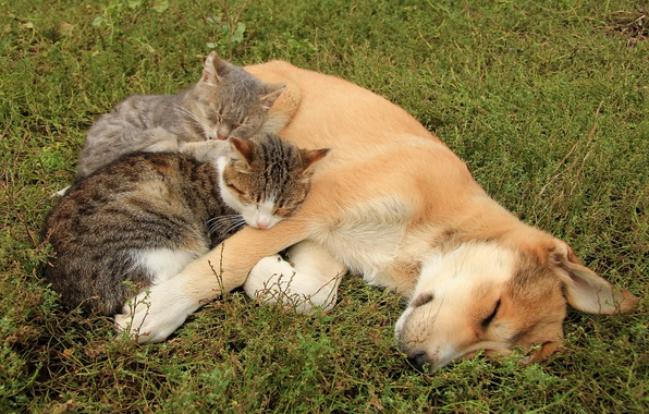 Picture cats, dog, friends
