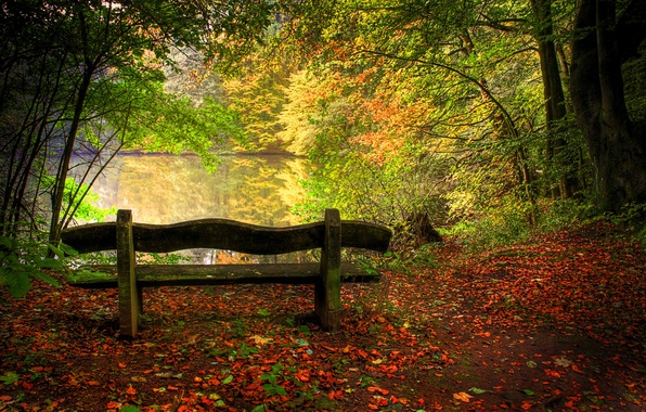 Picture trees, landscape, lake, in the fall, nature