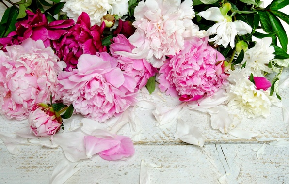 Picture flowers, petals, buds, peonies