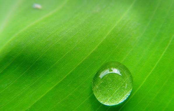 Picture sheet, green, drop