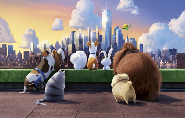 Secret Life Of Pets Wallpaper: Wallpaper City, Clouds, Sky, Chloe, Illumination, Cat