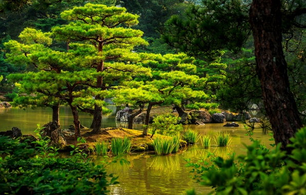 Picture greens, trees, pond, the reeds, stones, Japan, garden, Kyoto, the bushes
