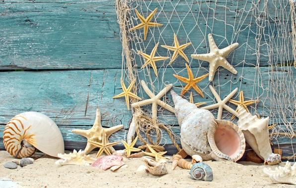 Picture sand, beach, tree, mesh, shell, wood, marine, stones, starfish, starfish, net, seashells