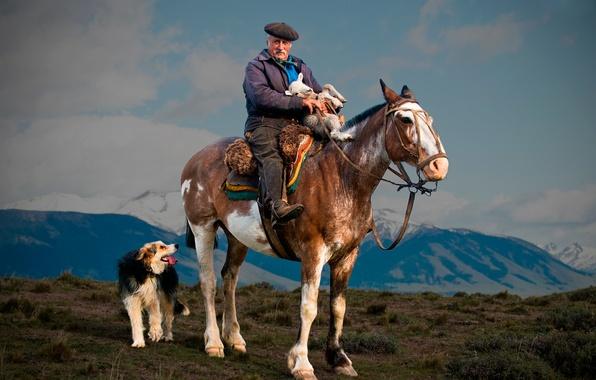 Picture horse, dog, shepherd, lamb