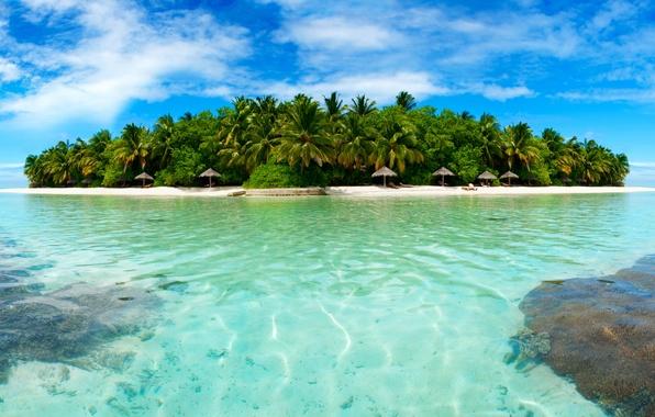 Picture beach, trees, tropics, palm trees, stay, island, Sea