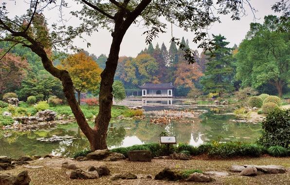 Picture grass, trees, pond, stones, garden, China, the bushes, Hangzhou Botanical Garden