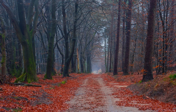 Picture road, autumn, forest, leaves, trees, moss