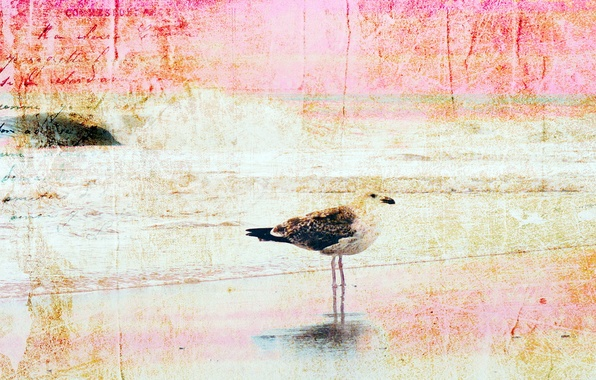 Picture style, background, bird, texture