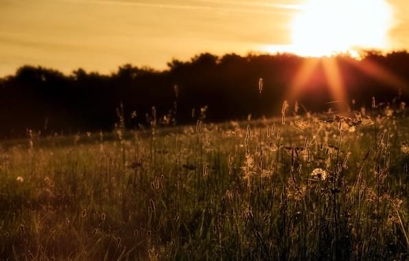 Picture field, grass, landscape, sunset