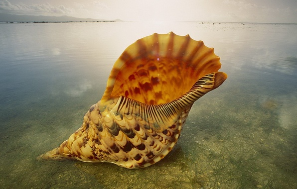 Photo wallpaper large, water, transparent, Shell