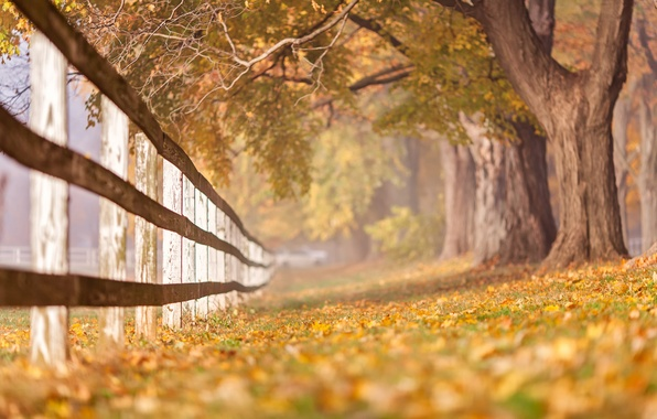 Picture autumn, nature, the fence