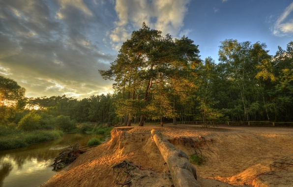 Picture forest, the sky, clouds, trees, sunset, river, open