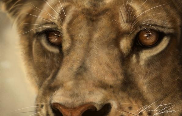 Picture cat, mustache, face, macro, predator, Leo, art, lioness, wild
