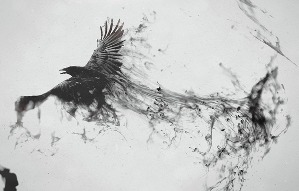 Picture bird, black, trail, Raven