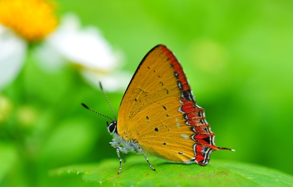 Picture BACKGROUND, BUTTERFLY, WINGS, GREEN, INSECT