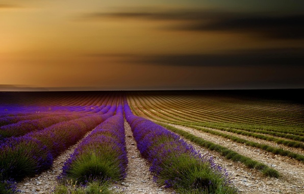Picture field, the sky, sunset, flowers, nature, France, lavender, Provence