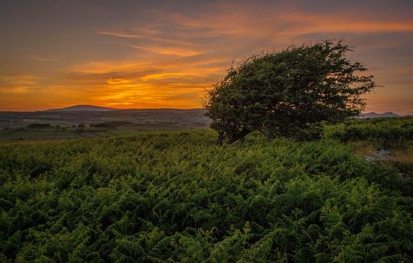Picture summer, grass, sunset, tree, hills
