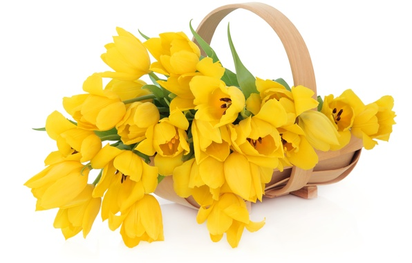 Picture white, flowers, yellow, tulips, basket