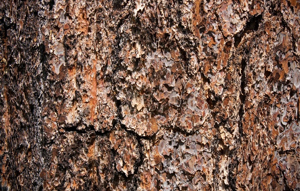 Picture background, tree, texture