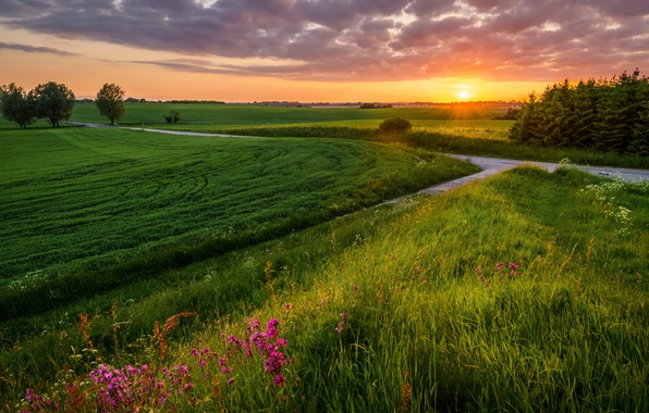 Picture road, field, summer, landscape, sunset