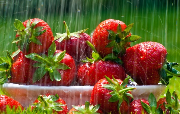 Picture grass, leaves, drops, rays, light, red, rain, lawn, food, strawberry, plate, green, leaves