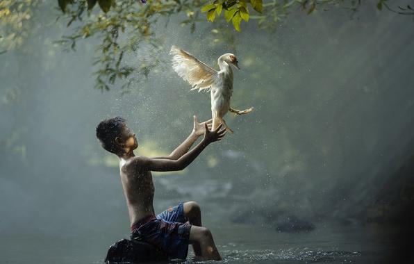 Picture river, bird, boy