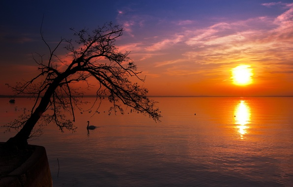 Picture landscape, tree, silhouette, nature. the sky. sunset