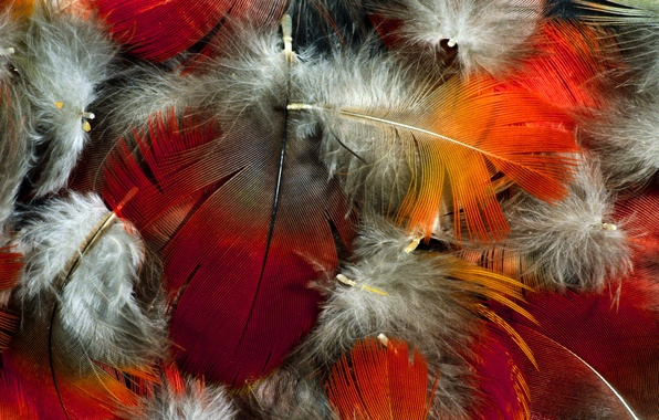 Picture color, feathers, fluff