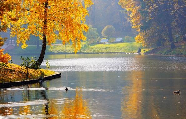 Picture autumn, nature, pond, Park, river, duck, fisherman