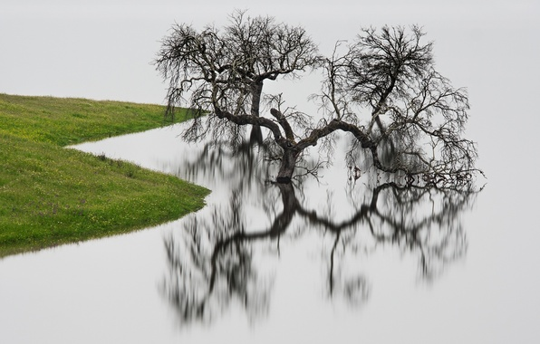 Picture water, reflection, tree, shore