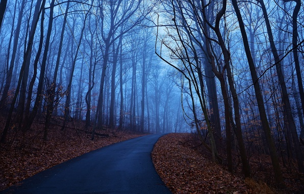 Picture road, autumn, leaves, trees, blue, fog, dawn, morning, Forest