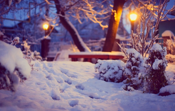 Picture winter, snow, trees, traces, nature, lighting, yard, lights, shop, the bushes