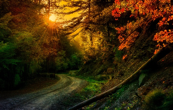 Picture road, rays, trees, nature, turn