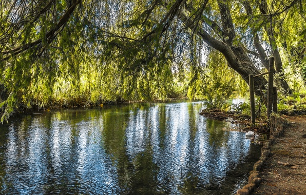 Picture trees, river, foliage