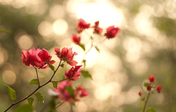 Picture leaves, light, flowers, branches, nature, petals, green, pink, bokeh