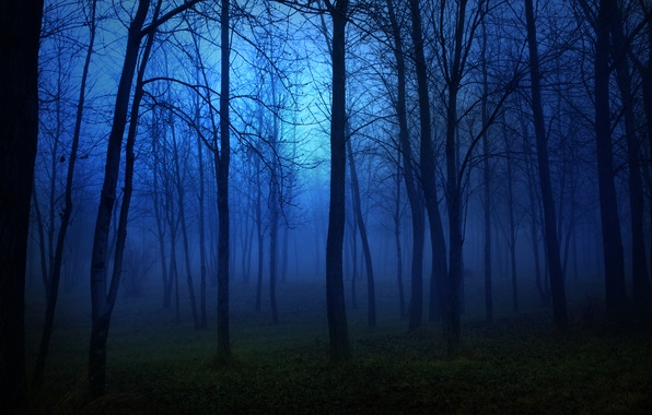Picture forest, light, trees, landscape, night, lights, darkness, fear, the moon, moon, forest, trees, night