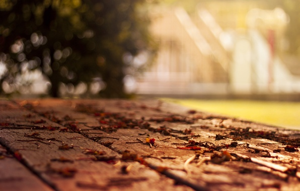 Picture tree, foliage, leaf, home, focus, blur, floor, leaves, leaf, falling leaves, sheets, widescreen Wallpaper, fallen …