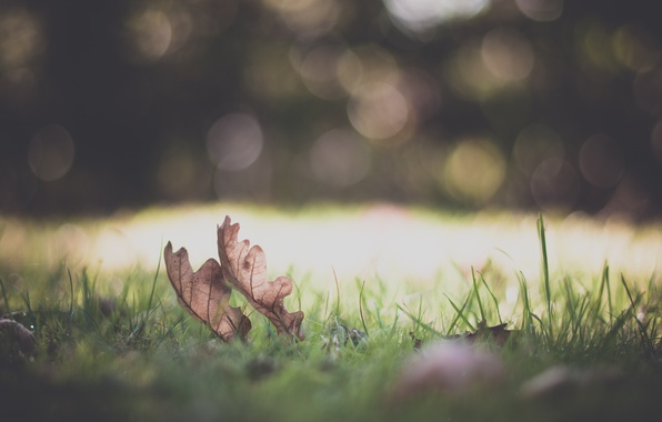 Picture greens, grass, leaves, macro, nature, background, widescreen, Wallpaper, plant, blur, meadow, wallpaper, grass, leaves, nature, ...