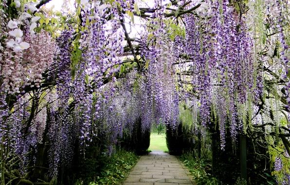Picture Park, Japan, track, alley, Wisteria, Wisteria, Kawachi Fuji Garden