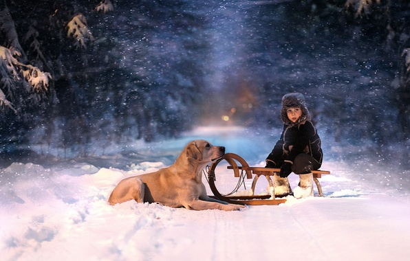 Picture winter, forest, look, snow, night, child, dog, sled