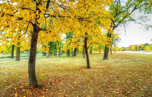 Picture autumn, grass, leaves, trees, Park, track, bench