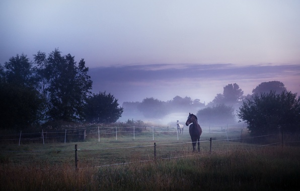 Picture field, fog, horses, morning