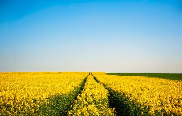 Picture the sky, flowers, blue, field, horizon, field of flowers, farm