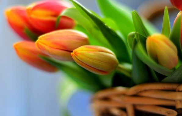 Picture flowers, basket, bouquet, tulips, flowers, tulips, bouquet, basket