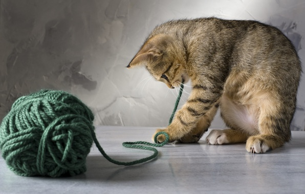 Picture cat, cat, tangle, kitty, green, thread, plays, striped