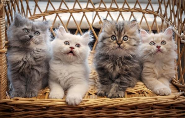 Picture basket, cats, a lot