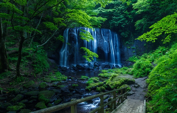 Picture greens, forest, trees, rock, stream, stones, waterfall, moss, bridges