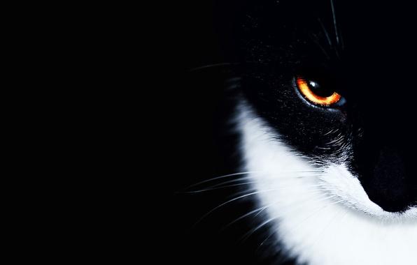 Picture cat, cat, eyes, background, black, minimalism