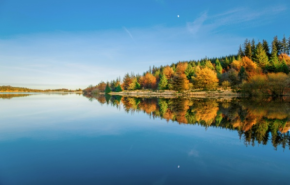 Picture winter, forest, the sky, water, reflection, trees, England, UK, January, reservoir, Devon, Dartmoor national Park