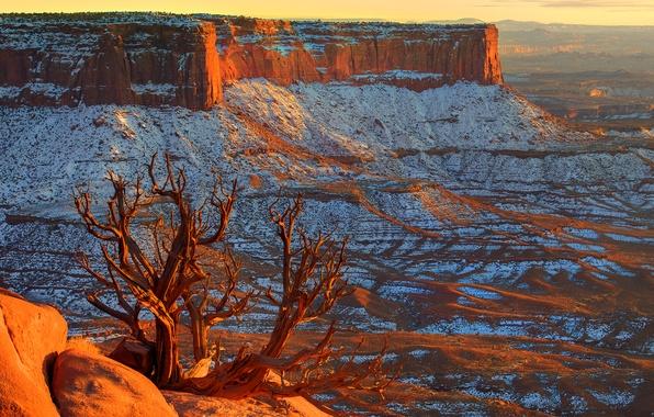 Picture the sky, snow, sunset, stones, tree, horizon, canyon, USA, utah, canyonlands